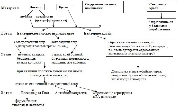 микробиологического исследования при менингококковых инфекциях