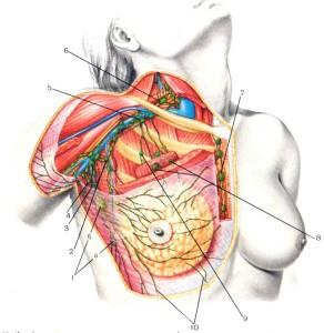 Лимфатические сосуды и регионарные лимфатические узлы молочной железы