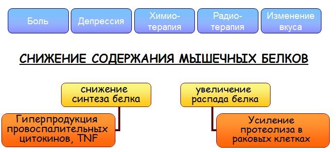 МЕХАНИЗМЫ КАХЕКСИЧЕСКОГО СОСТОЯНИЯ