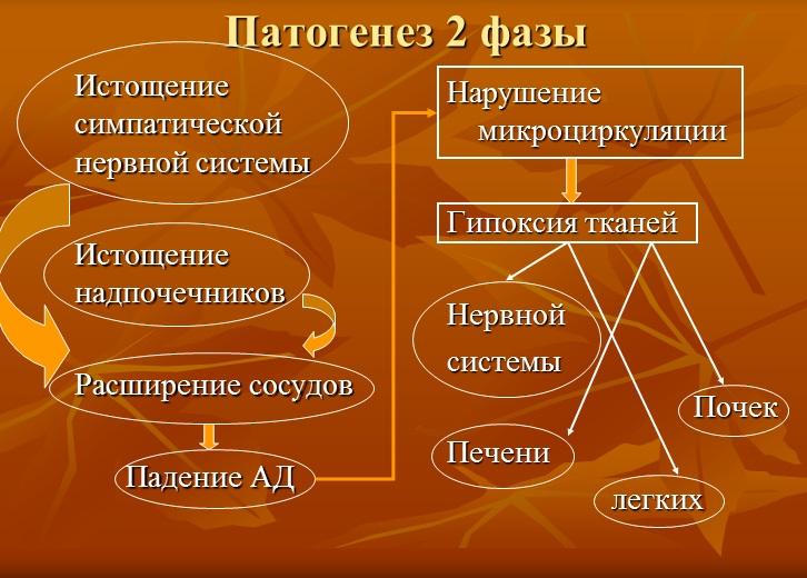 Патогенез 2 фазы