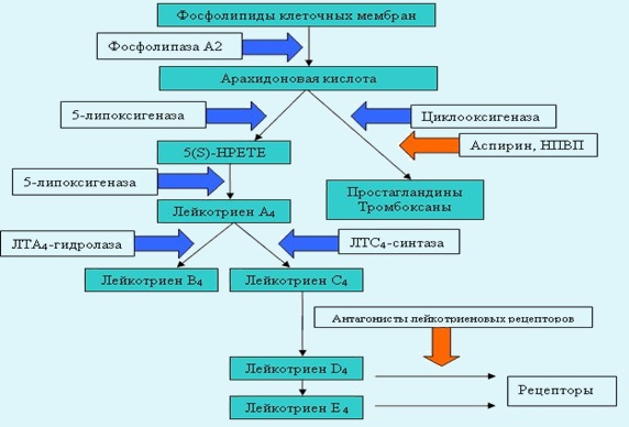 аспириновая бронхиальная астма этиология