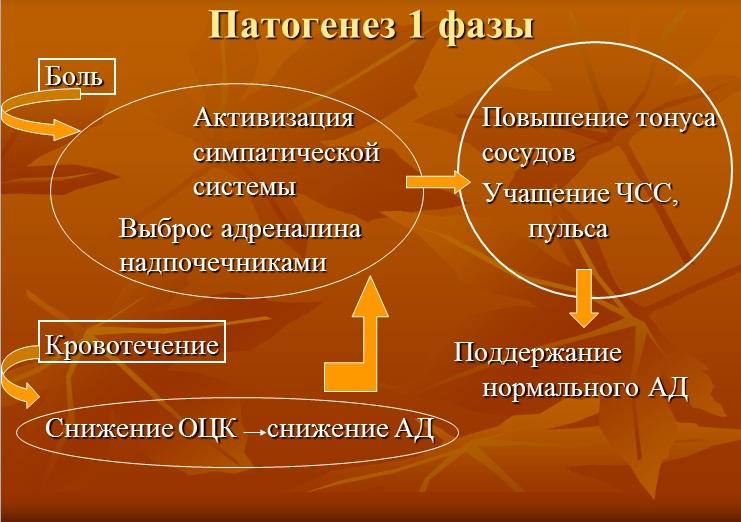 Патогенез 1 фазы